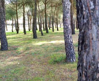 la biomasa y el medio ambiente
