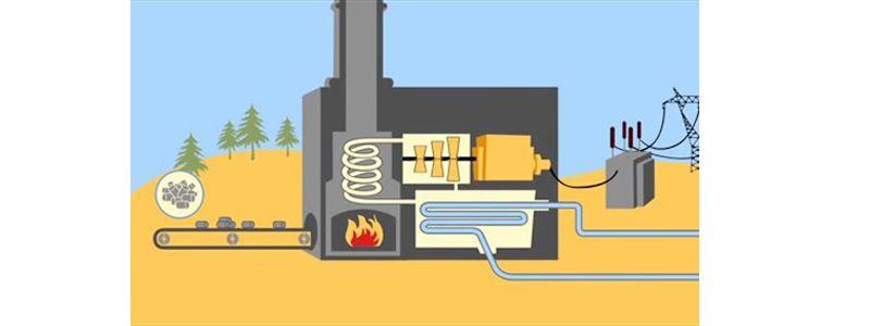 biomasa en España
